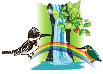 虹とヤマセミとカワセミと