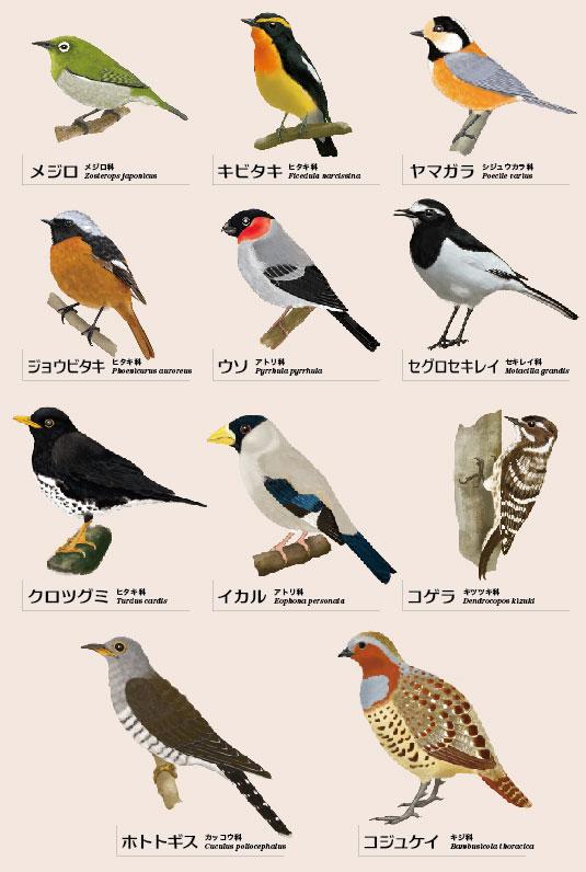 野鳥11種